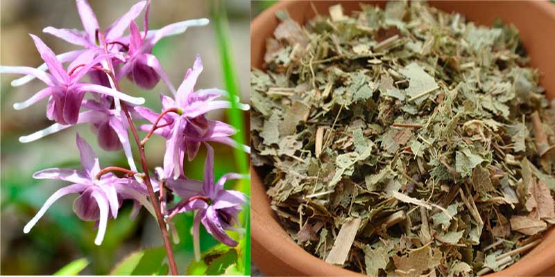 horny goat weed chinese herbal for erectile dysfunction